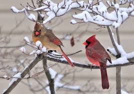 birds-in-snow