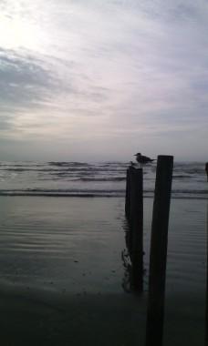 gulls-on-the-post