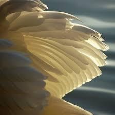 under-his-wings
